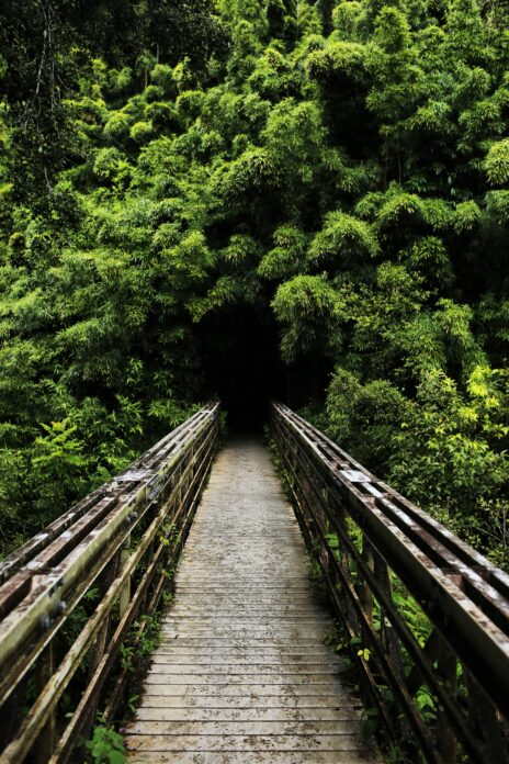Hiking bridge on a clear day during the best time of year to visit Hawaii